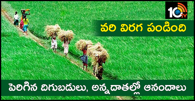 Record Paddy Yields In Sanga Reddy District