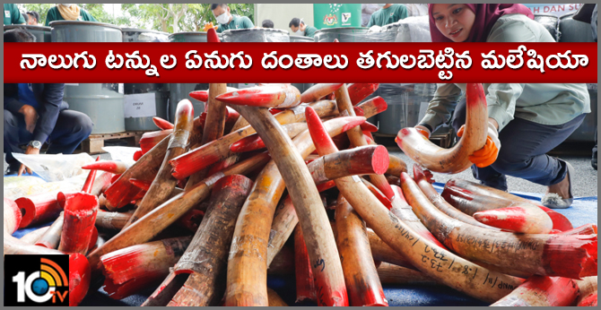 Malaysia destroys 4 tons of ivory tusks, products