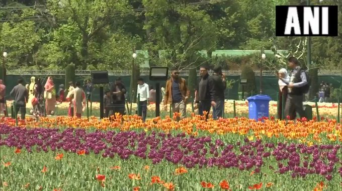 Jammu Kashmir is Asia's largest tulip flower garden watch a large number of tourists visit