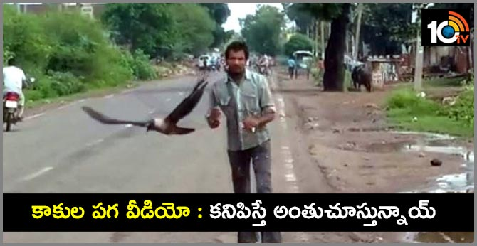 Crows became enemies of this man's life, he has been chasing for 3 years in shivpuri MP