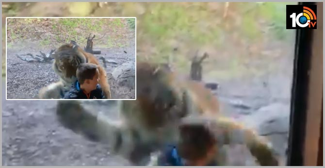 Watch: Tiger 'attacks' little boy at Dublin Zoo, leaves many terrified online