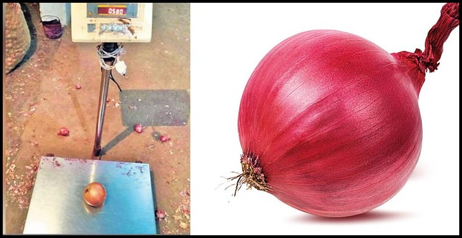 chhattisgarh raipur 6 -tons of onion from istanbul weighing 1 kg each two or theree onions