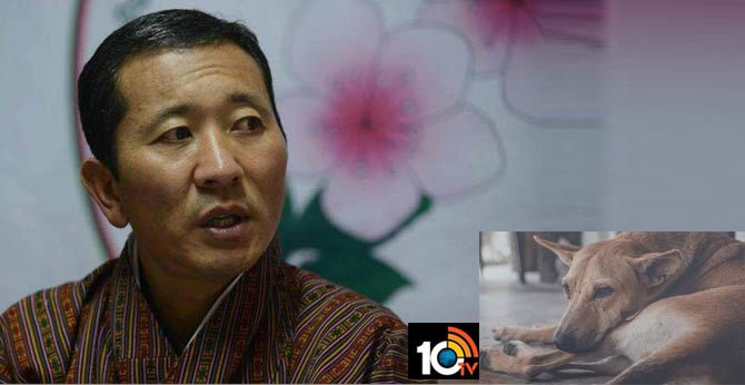 Bhutan PM asks citizens to adopt stray dogs as birthday gift to King