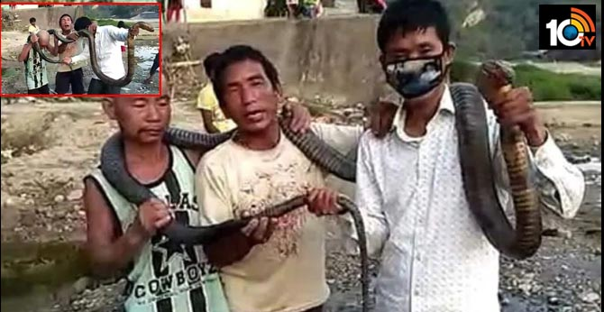 No Rice Left Amid Lockdown, Arunachal Hunters Kill King Cobra For Meal