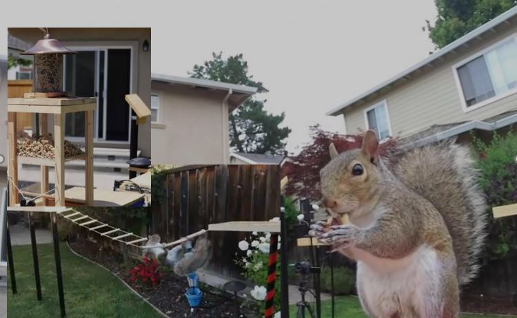 former NASA engineer obstacle course squirrel feeder is amazing to watch