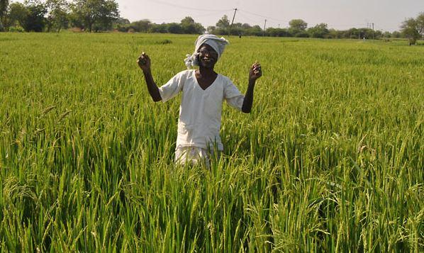 telangana supplied rice to 5 states in yasangi