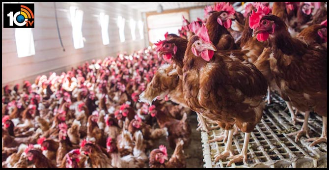 Killer virus from chicken farms could wipe out half of mankind, scientist warns