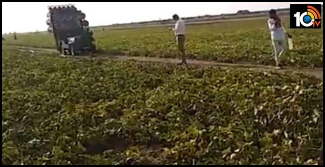 locust attack invasion idea dj on loud music to fight locusts up cop tweets video