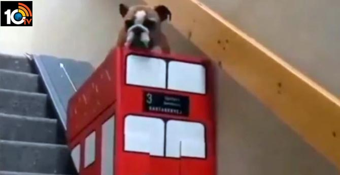 hoomans create double decker bus slide for dog with arthritis to climb down stairs cute video