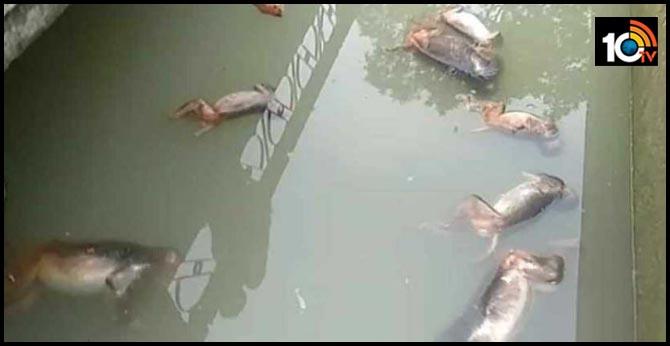 13 monkeys found dead in Assam water reservoir