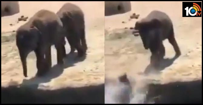 Mischievous baby elephant pushes friend in water.. Just like humans, says Twitter