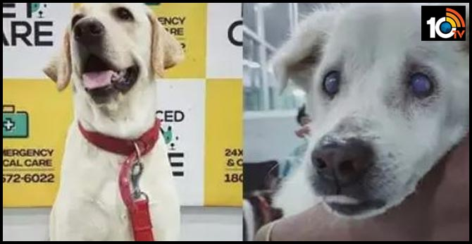 dog-donates-blood-to-save-another-canines-life-in-kolkata