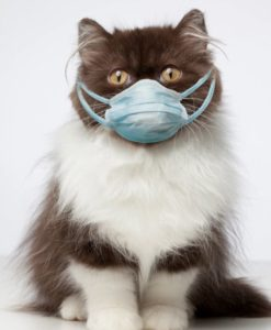 Cats and dogs are suffering breathing problems after catching Covid, study claims