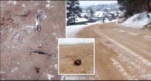 Rassia Road with Human Bones,Skull