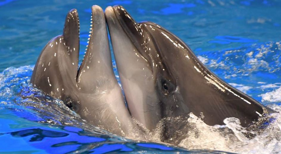 Dolphins have personality traits very similar to humans