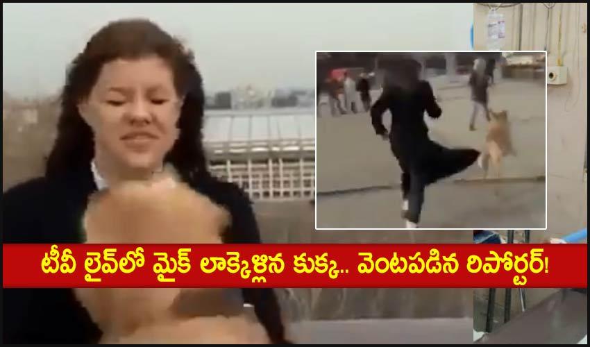 Viral Video: టీవీ లైవ్లో మైక్ లాక్కెళ్లిన కుక్క.. వెంటపడిన రిపోర్టర్!