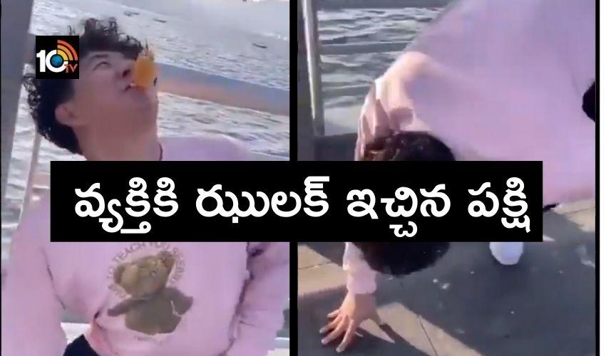 Feeding the seagulls : వ్యక్తికి ఝులక్ ఇచ్చిన పక్షి..తిక్క కుదిరిందంటున్న నెటిజన్లు