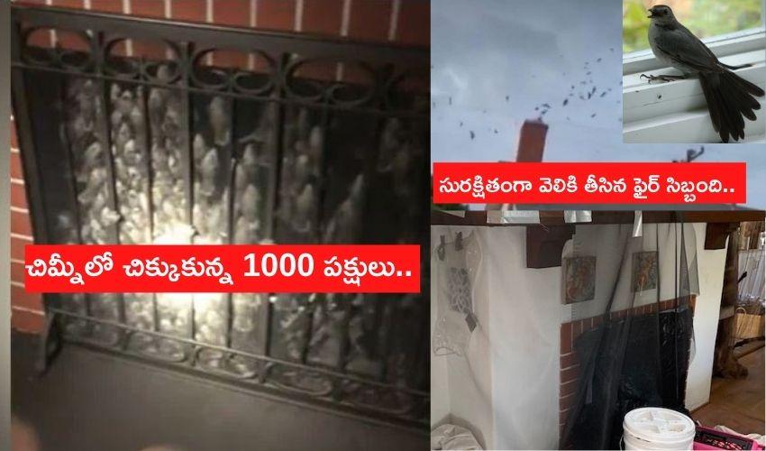 చిమ్నీలో చిక్కుకున్న 1000 పక్షులు..సురక్షితంగా వెలికి తీసిన ఫైర్ సిబ్బంది