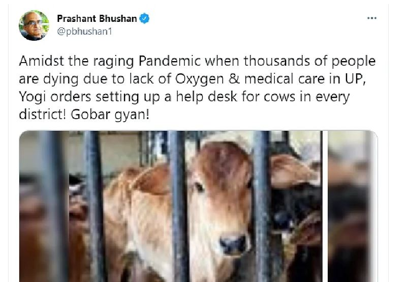 Cow Twi