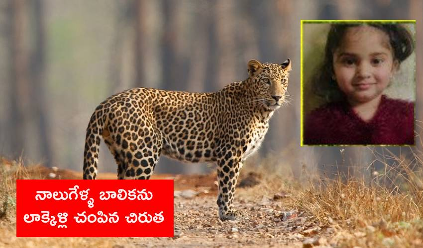 Leopard Attack: బాలికను లాక్కెళ్లి చంపిన చిరుత