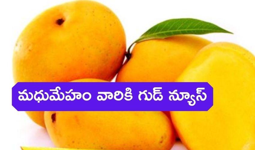Sugar Free Mango : మధుమేహం వారికి గుడ్ న్యూస్, చక్కెర లేని మామిడిపండ్లు