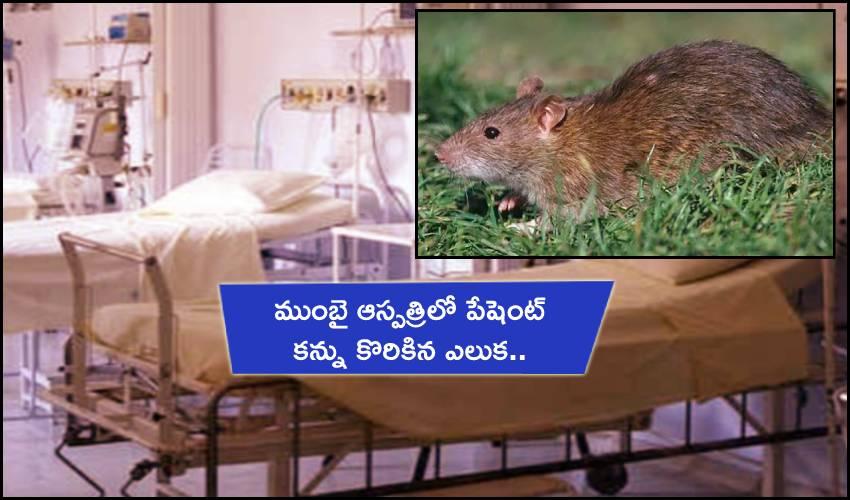 Rat Bite Patient Eye : ముంబై ఆస్పత్రిలో పేషెంట్ కన్ను కొరికిన ఎలుక..