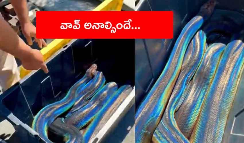 Snake Viral Video : 4కోట్ల 80లక్షల వ్యూస్, 32లక్షల లైకులు.. సోషల్ మీడియాలో వైరల్గా మారిన పాము