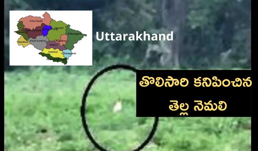 Uttarakhand : తెల్ల నెమలి..85 ఏళ్ల చరిత్రలో తొలిసారి