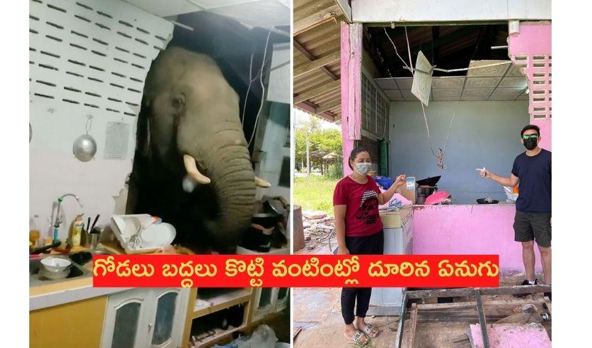 Wild elephant: గోడలు బద్దలు కొట్టి వంటింట్లో దూరిన ఏనుగు!