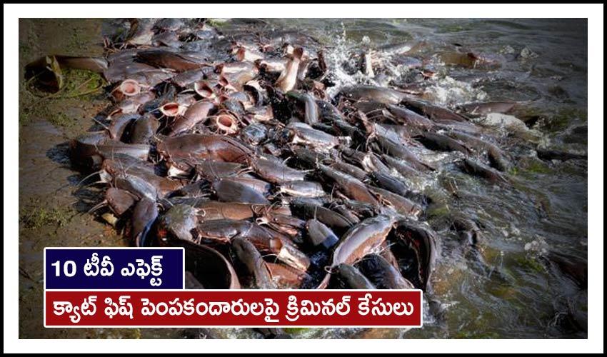 Catfish Farming : 10 టీవీ ఎఫెక్ట్ : క్యాట్ ఫిష్ పెంపకందారులపై క్రిమినల్ కేసులు