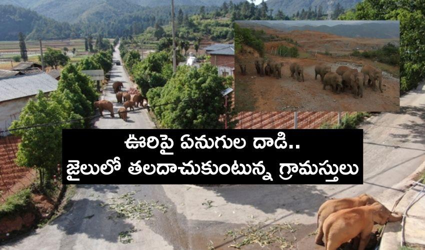 Elephants Attack : ఊరిపై ఏనుగుల గుంపు బీభత్సం..జైలులో తలదాచుకుంటున్న గ్రామస్తులు
