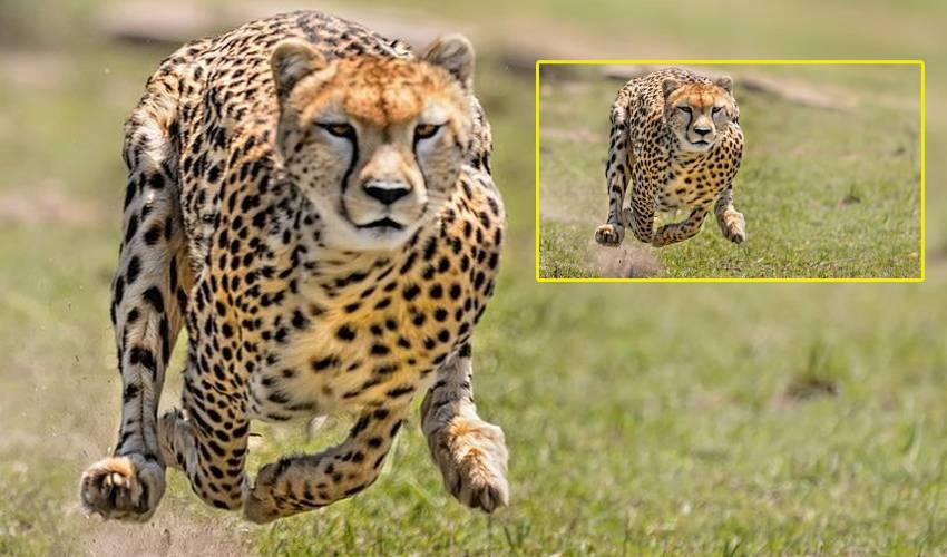 Cheetah Attack : చిత్తూరు జిల్లాలో దంపతులపై చిరుత దాడి