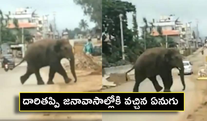Elephant : దారితప్పి జనావాసాల్లోకి వచ్చిన ఏనుగు