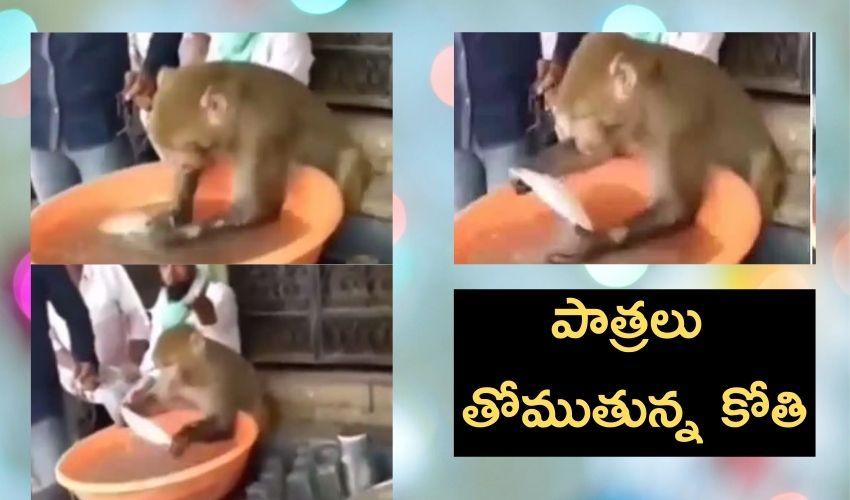 Monkey : పాత్రలు తోముతున్న కోతి..వీడియో వైరల్