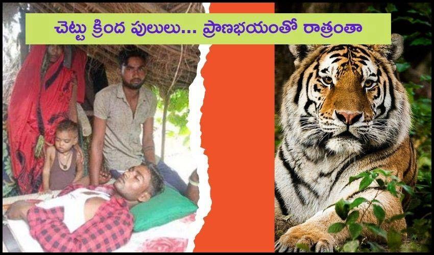 Wild Tigers Attack : స్నేహితుల ప్రాణాలు తీసిన అడవి పులులు..రాత్రంతా చెట్టుపై ప్రాణభయంతో