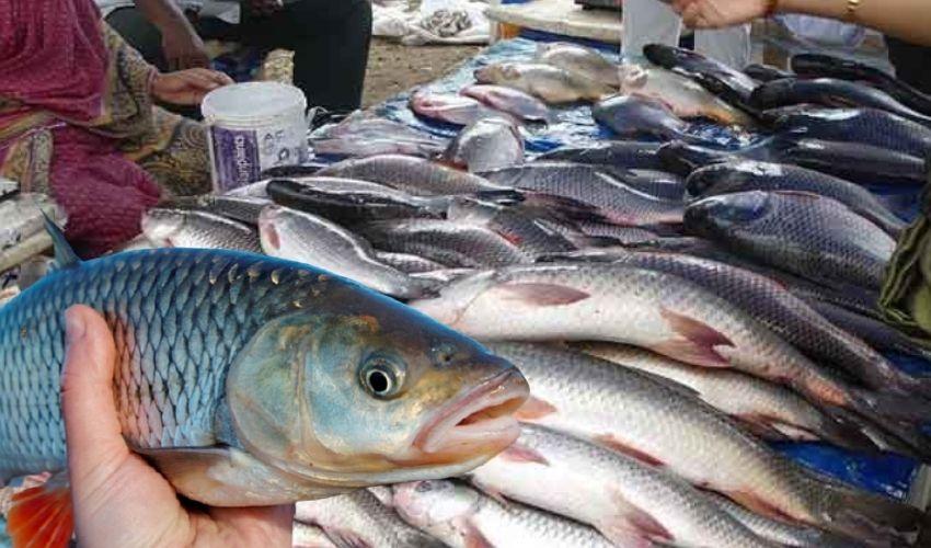 FISH : చేపలు కొంటున్నారా…తాజావో కాదో తెలుసుకోవటం ఎలాగంటే!..