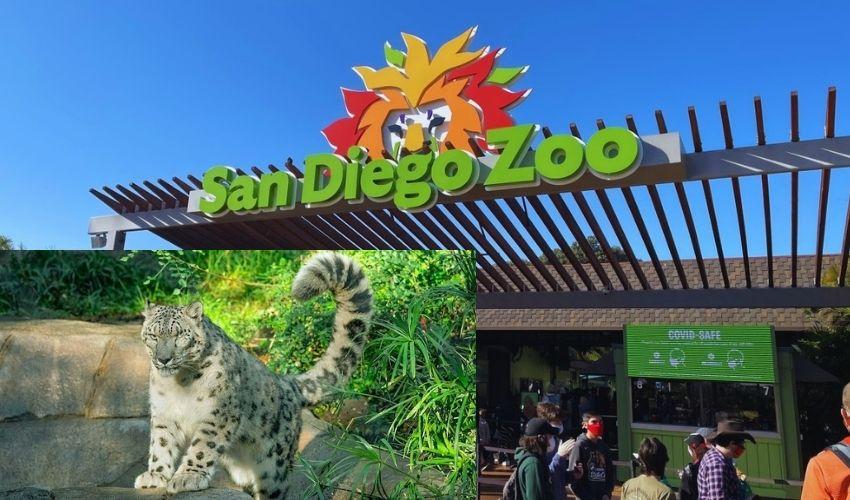 San Diego Zoo : అమెరికా శాండియాగో జూలో కోవిడ్ కలకలం…ఓ చిరుతకు సోకిన వైరస్