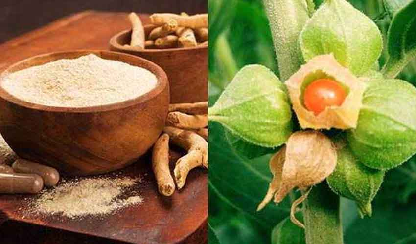 Ashwagandha : కరోనా రోగులకు అశ్వగంధ ఔషధం.. బ్రిటన్లో క్లినికల్ ట్రయల్స్