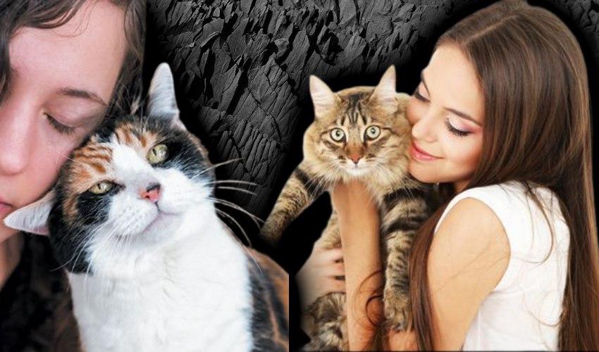 Cat Pets : కుక్కల కన్నా పిల్లుల పెంపకమే మేలా.. ఎందుకంటే?..