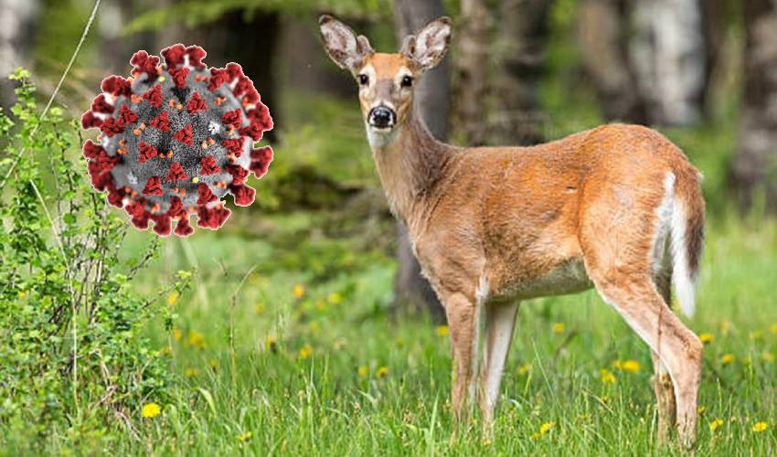 Deer : జింకకు కరోనా..!
