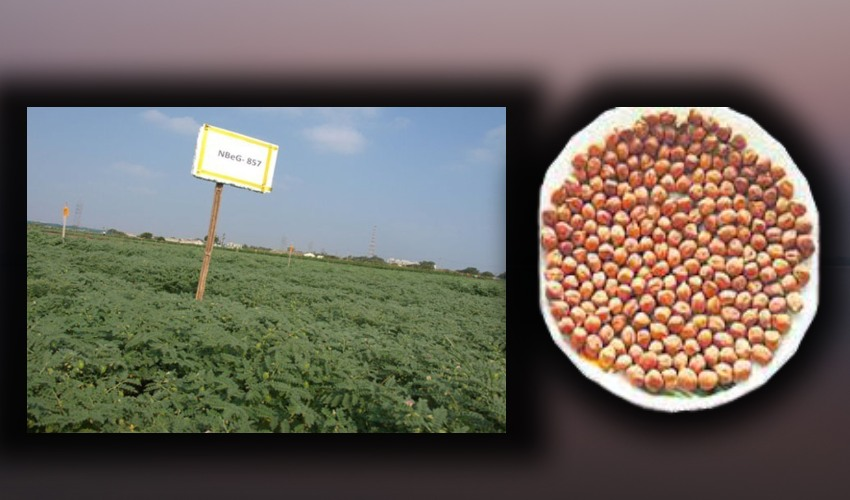 https://10tv.in/agriculture/new-bending-in-peanuts-high-yield-possible-264979.html