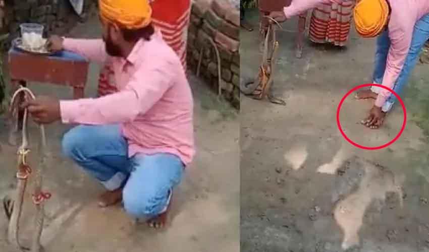 Snake Rakhi : పాములకు రాఖీ కట్టాడు.. ఆ తర్వాత చనిపోయాడు