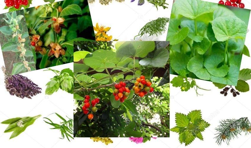 Medicinal plants : మన చుట్టూ ఉండే ఔషధాల మొక్కలు..ఆరోగ్యాల సిరులు..