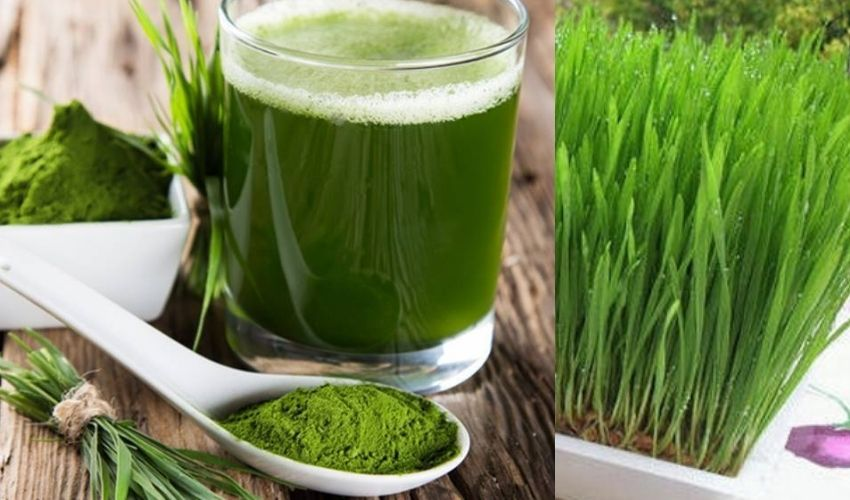 Wheat Grass : గోధుమ గడ్డితో లక్షల ఆదాయం..