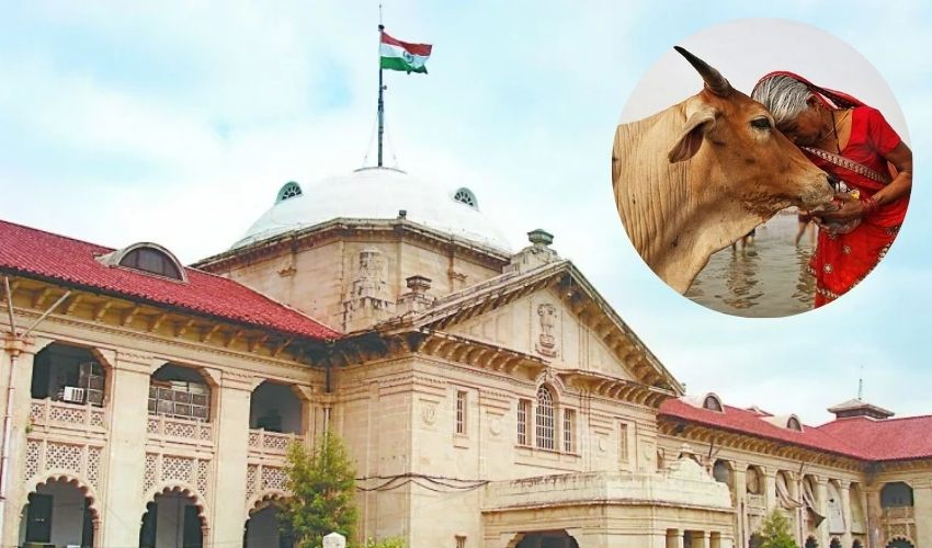 https://10tv.in/national/cow-as-national-animal-allahabad-high-court-reference-to-the-central-govt-270533.html