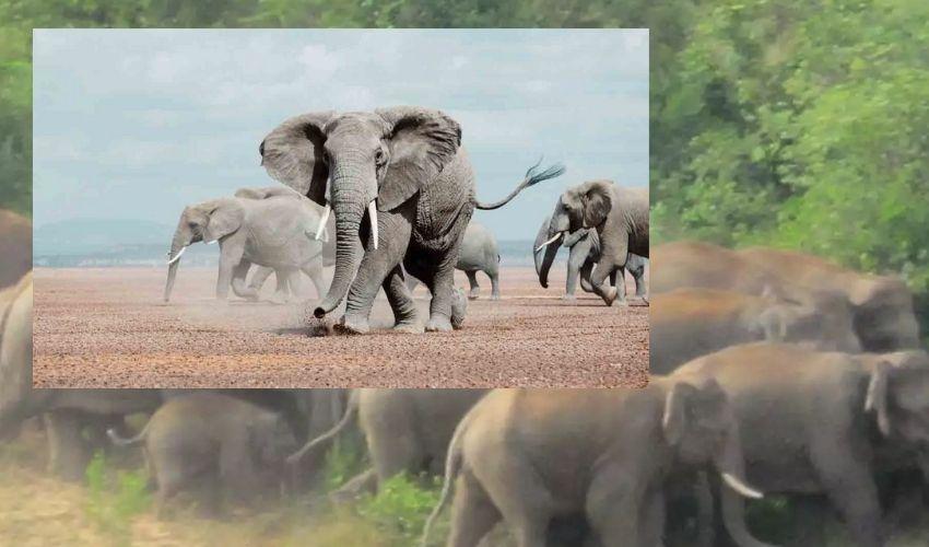 Elephants Ettack :రెచ్చిపోయిన ఏనుగులు.. బీజేపీ నాయకుడిని తొక్కి చంపేసాయి..