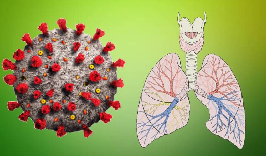 Coronavirus : యువతకు కరోనా సోకినా.. ఊపిరితిత్తుల ముప్పు తక్కువే..!