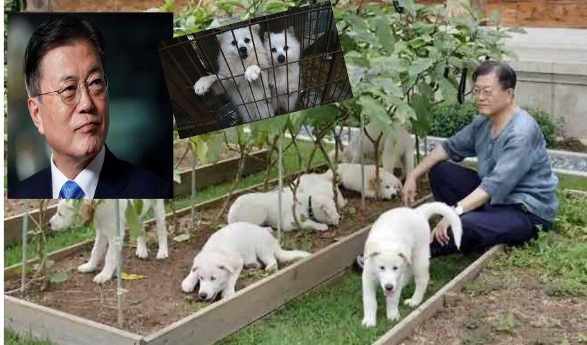 https://10tv.in/international/south-koreas-president-moon-jae-in-mulls-dog-meat-ban-282278.html