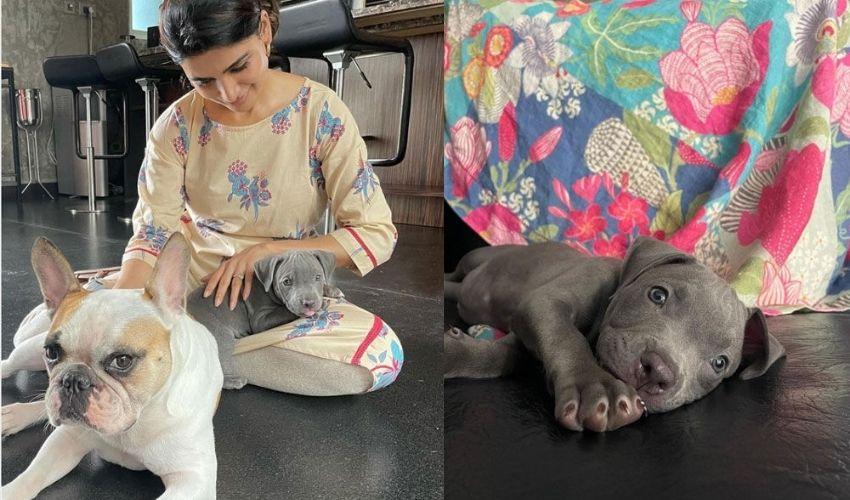 Samantha Akkineni: సమంతకు సొంత బిడ్డలైన హ్యాష్, సాషా..!