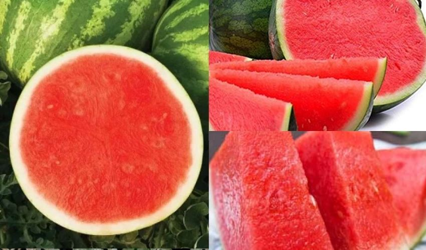 https://10tv.in/agriculture/kerala-agricultural-university-developed-seedless-watermelon-280840.html